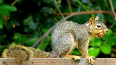 Is Adopting a Pet Squirrel a good Idea?