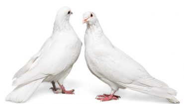 How Adaptable are Birds as Pets?