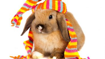 How Rabbits Can Make Great Pets for your Children?
